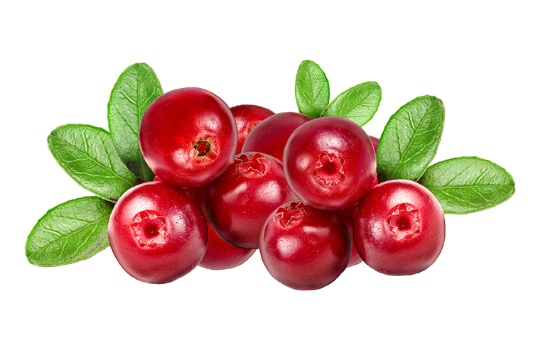 Cranberry cranberries to cure uti