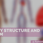 Artery System and Structure